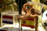 paul-the-octopus-450