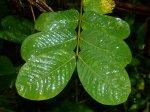 wet_leaves.jpg