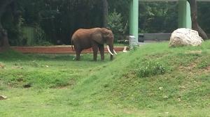 tusker_Zoo